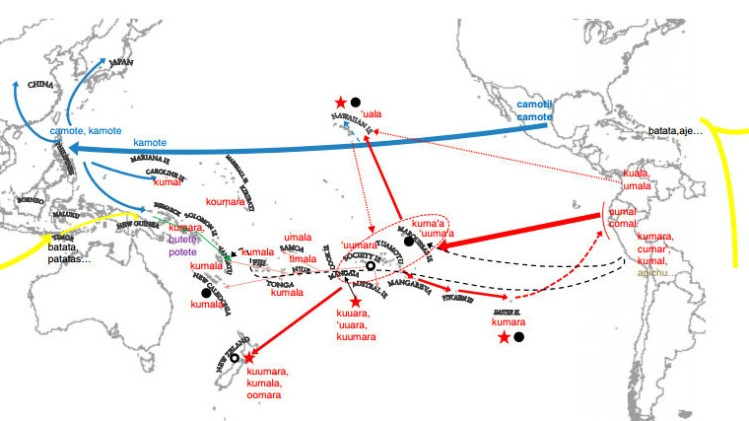 "Map depicting the multiple introductions of the sweet potato in the Pacific. (NPR's ""The Salt"")"