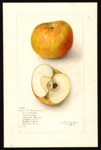 US Department of Agriculture's water color collections.
