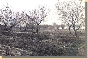 The peach orchard at Gettysburg.