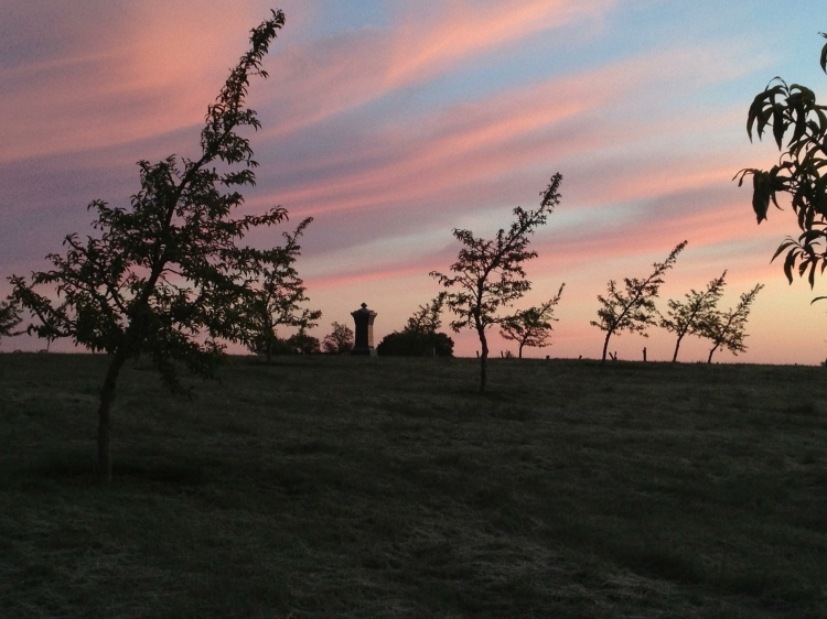 The new Sherfy orchard at dawn, May 2013
