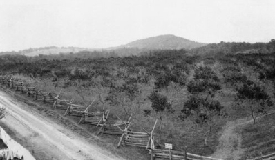 One of the few surviving images of the original Sherfy orchard, in William A. Frassanito, Gettysburg, Then and Now: Touring the Battlefield with Old Photos, 1865-1889.