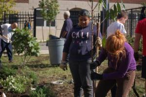 Is this urban orchard in Philly a threat to native insect pollinators?
