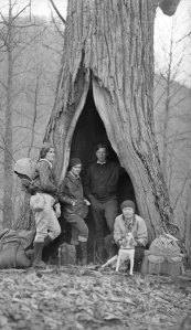 Smoky Mountains Hiking Club in an old Chestnut Tree.