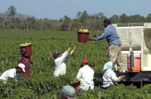 Tomato Pickers in Central Florida are paid by the 32 pound pail.