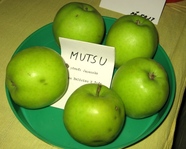 Mutsu Apples. Wikimedia Commons.